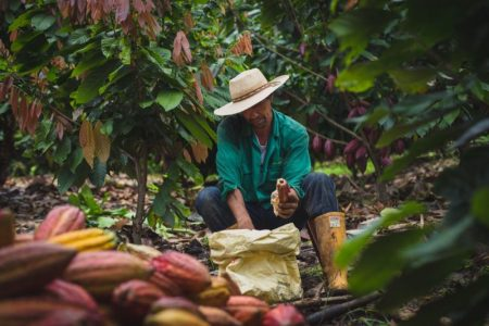 Confectionery expert Baxendale aims to enhance Luker's Colombian chocolate exports