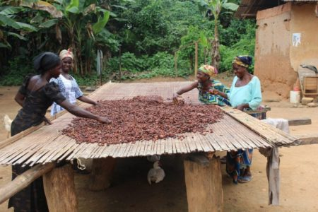 Fairtrade report identifies greater combined initiatives required on key cocoa sustainability schemes