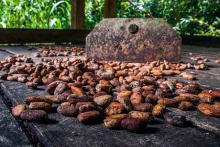 Fairtrade establishes producer resilience funds to combat coronavirus impact