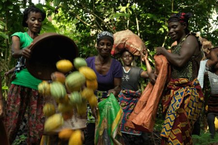 Nestlé's decision to cease Fairtrade cocoa sourcing sparks major concern from Ivory Coast farmers
