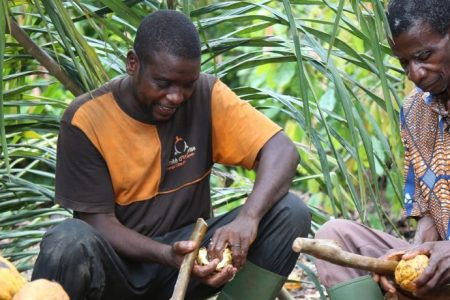 Ferrero drives towards delivering Cocoa and Forests Initiative environmental targets
