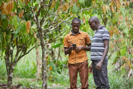 Olam Cocoa sets out digitally-led scheme tackling child labour in Cameroon