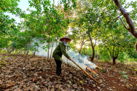 Olam releases sustainability strategy for supporting cashew nut farmers globally