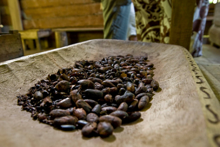 Fairtrade Foundation assists cocoa farmers operating amid coronavirus