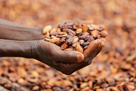 Confectionery firms including Ferrero, Mars, Nestlé and Mondelez call for EU-wide cocoa policy