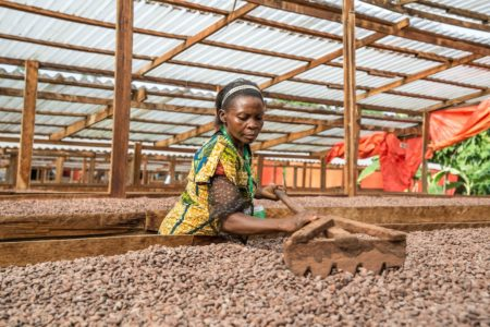 Ghana's cocoa sector explores medicinal use of crops with major study partnership